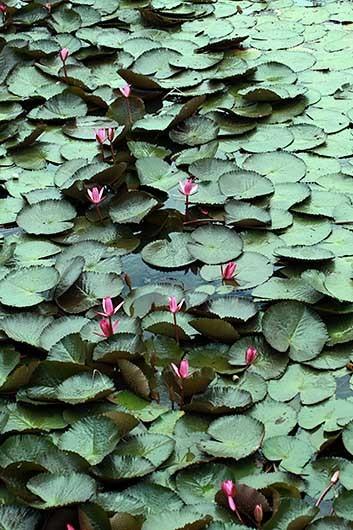 ベンガルール ラールバーグ植物園