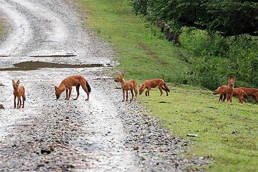 Nagarhole国立公園